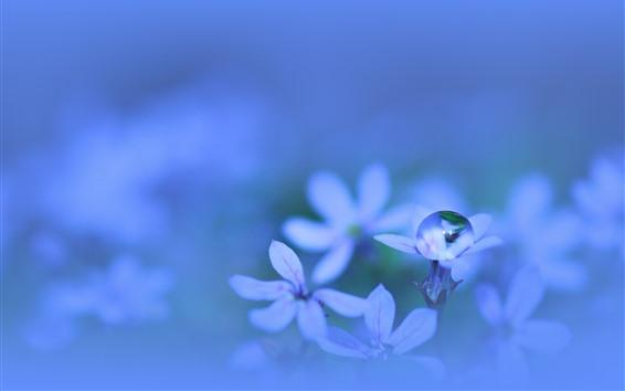 Papéis de Parede Pouca flor, gota da água, fotografia macro, nebuloso