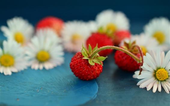 Fondos de pantalla Pequeña fresa, manzanilla, flores blancas