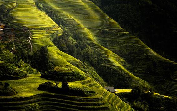 Wallpaper Longji rice terraces, slope, green, Guilin, China