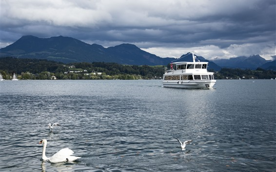 Fondos de pantalla Lucerna, Suiza, río, cisne, aves, barco