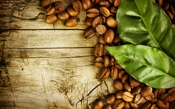 Wallpaper Many coffee beans, green leaves