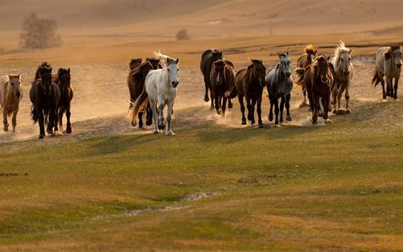 Fondos de pantalla Muchos caballos corriendo
