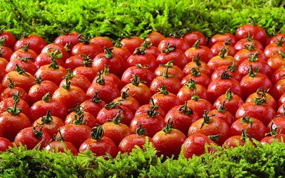 壁紙 多くのトマト、草、水滴