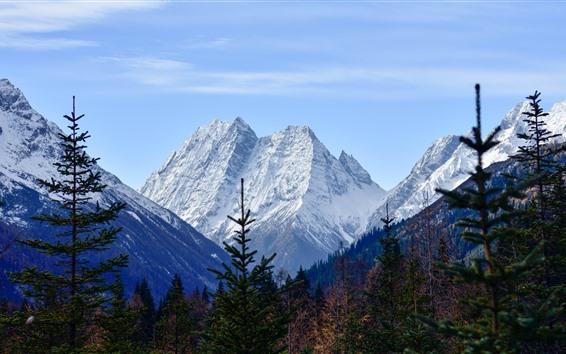 Fondos de pantalla Monte Siguniang, nieve, árboles, otoño, China