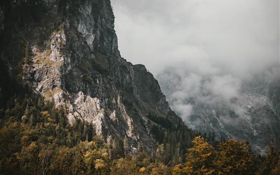 Fondos de pantalla Montañas, niebla, árboles, otoño, mañana.