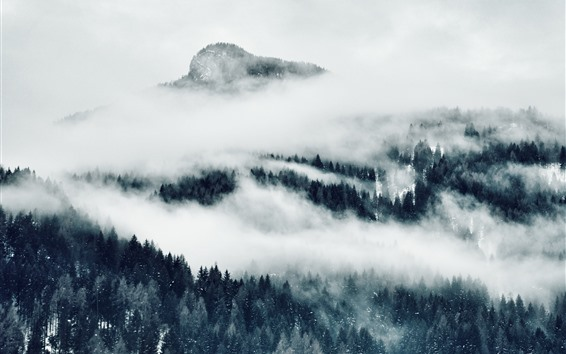 Wallpaper Mountains, fog, trees, black and white picture