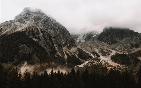 Fondos de pantalla Montañas, árboles, niebla, nubes