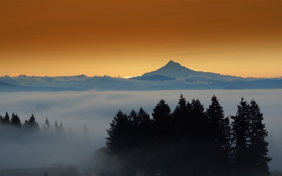 Fondos de pantalla Montañas, árboles, niebla, mañana.
