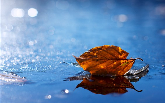 배경 화면 건조 한 잎, 얼음, 젖은, 겨울