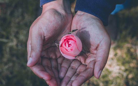 Fondos de pantalla Una rosa rosada en las manos