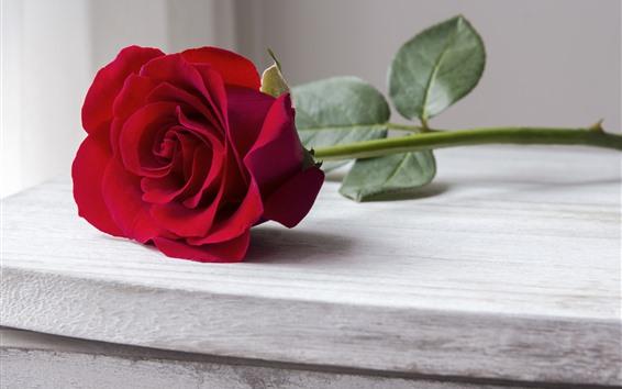 Fondos de pantalla Una rosa roja, pétalos, mesa