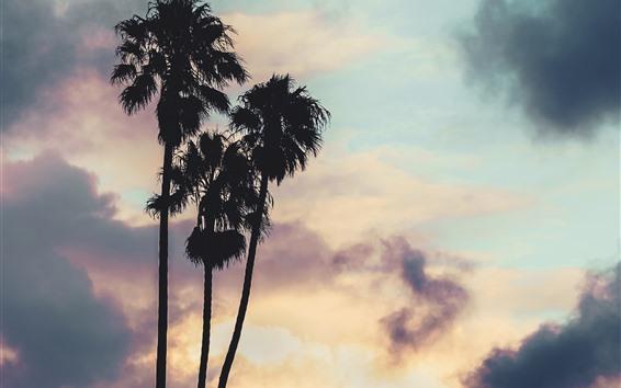 Fondos de pantalla Palmeras, nubes, puesta de sol, silueta