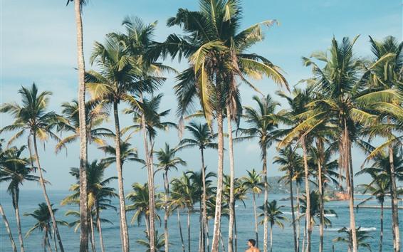 Wallpaper Palm trees, man, sea