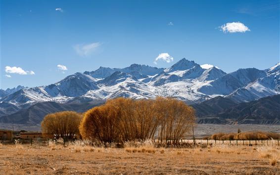 Fond d'écran Pamirs, montagnes enneigées, arbres, herbe, automne