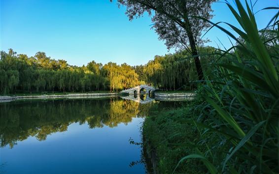 Fondos de pantalla Parque, puente, lago, hierba, sauce