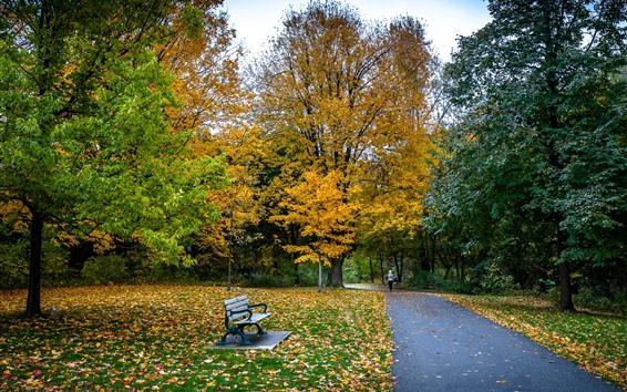 Fondos de pantalla Parque, árboles, hojas amarillas y verdes, camino, banco, otoño.