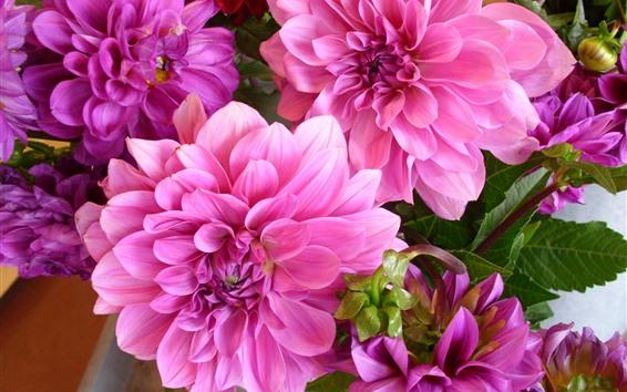 Fondos de pantalla Dalias rosadas, flores de primer plano