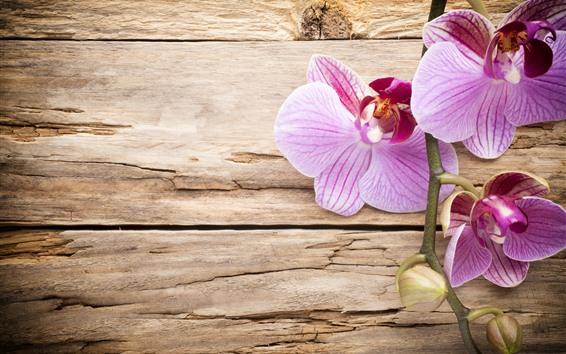 Fondos de pantalla Phalaenopsis rosado, tablero de madera