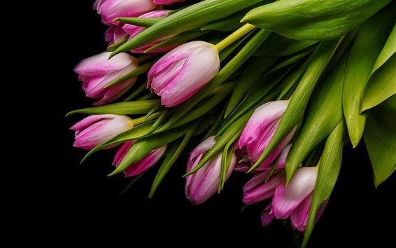 Fondos de pantalla Tulipanes rosa, hojas verdes, fondo negro