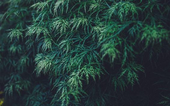Fondos de pantalla Plantas, hojas verdes, naturaleza