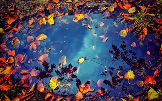 Wallpaper Puddle, water, falls leaves