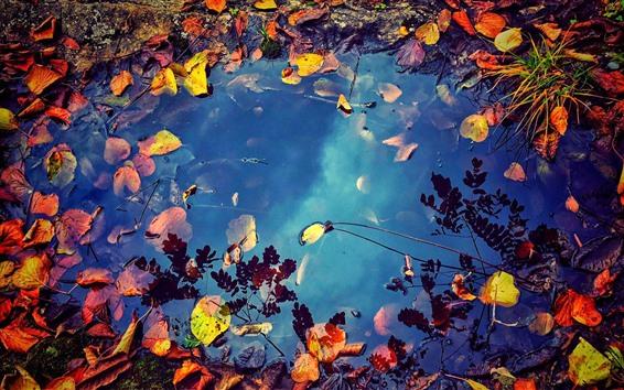 壁紙 水たまり、水、落ち葉