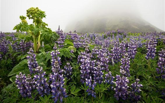 Wallpaper Purple flowers, wildflowers, mountain, fog, morning