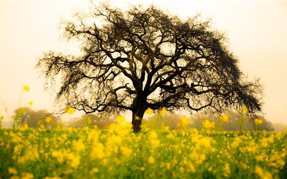 배경 화면 유채 꽃밭, 외로운 나무