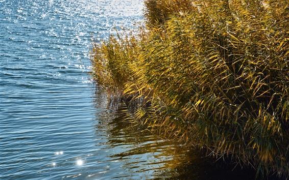 Fondos de pantalla Cañas, hierba, agua, lago, brillo.