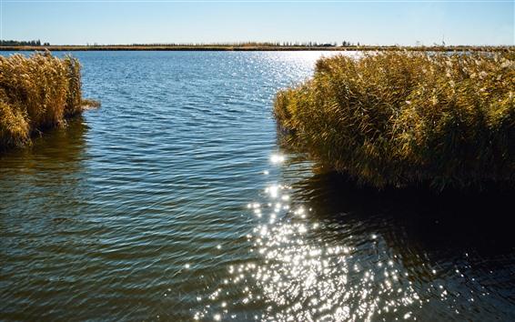 Fondos de pantalla Cañas, lago, agua, brillo