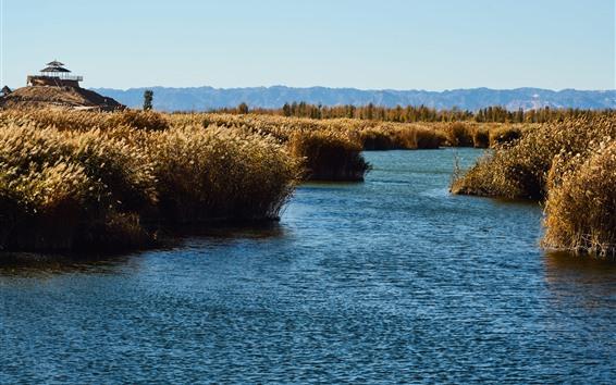 Fondos de pantalla Cañas, pantano, agua, otoño