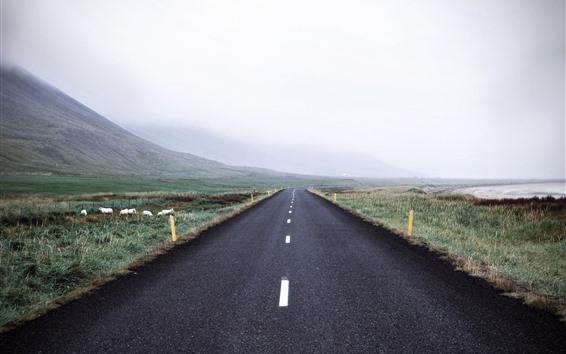 Fondos de pantalla Carretera, campos, cerros, ovejas, mañana, niebla.