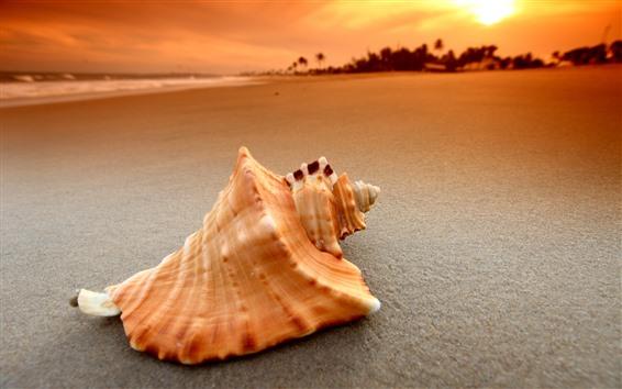 Fondos de pantalla Cerca de Shell, playa, arena