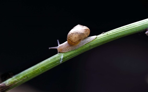 Wallpaper Snail, insect, black background