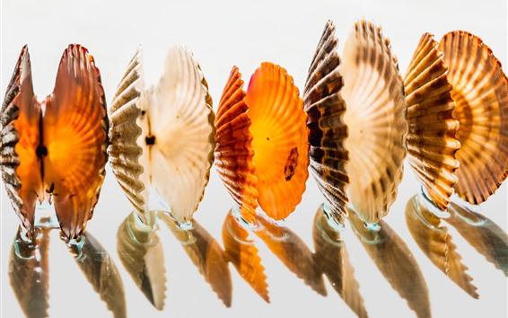 Fondos de pantalla Algunas conchas marinas, fondo blanco, sombra