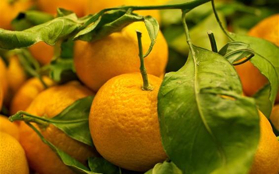Fondos de pantalla Algunas mandarinas, hojas verdes.