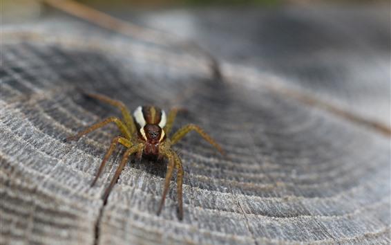 Fondos de pantalla Fotografía macro de araña, muñón
