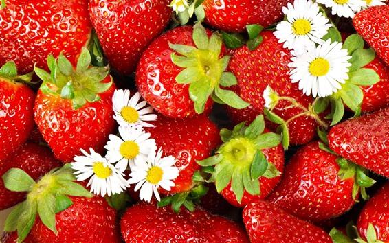 Fondos de pantalla Fresas de manzanilla blanca