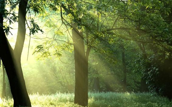 Fondos de pantalla Verano, árboles, césped, verde, rayos del sol, niebla