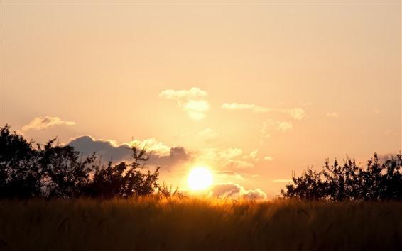 Fondos de pantalla Puesta de sol, césped, resplandor, verano