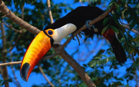 Обои Птица, клюв, дерево