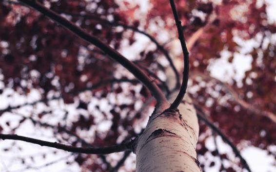Fondos de pantalla Tronco de árbol, textura, brujería
