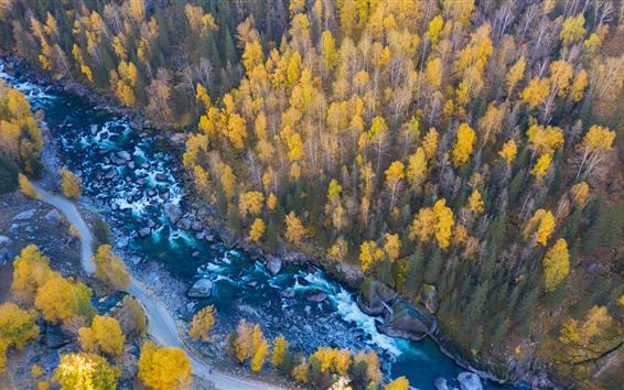 Wallpaper Trees, creek, stones, autumn, top view