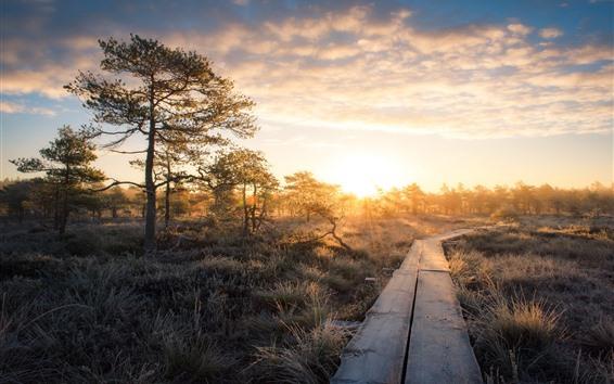 Fondos de pantalla Árboles, césped, sendero de madera, amanecer, mañana