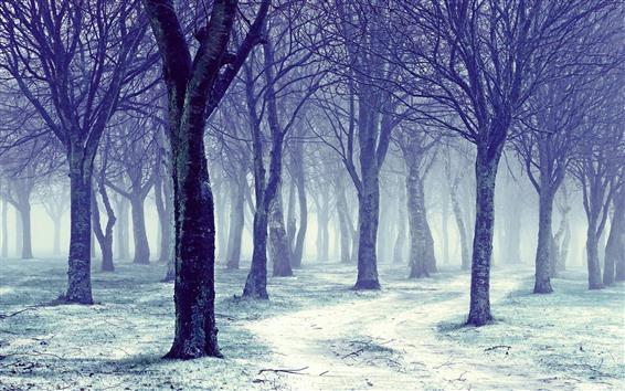 Fondos de pantalla Árboles, nieve, niebla, invierno, mañana