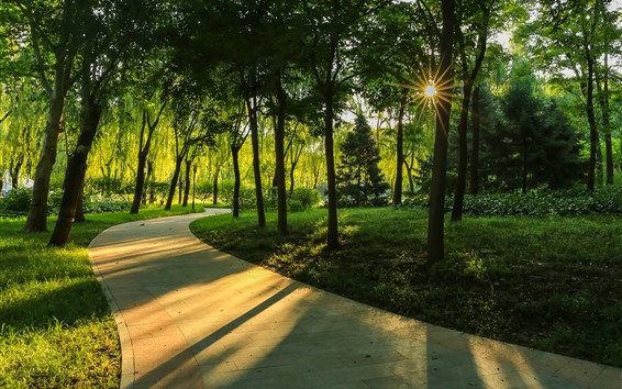 Wallpaper Trees, sun rays, shadow, path, park
