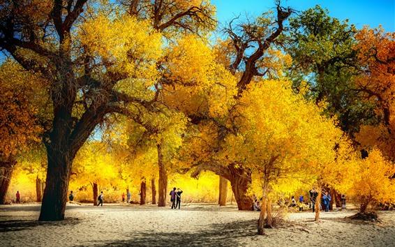 Fondos de pantalla Árboles, hojas amarillas, parque, otoño