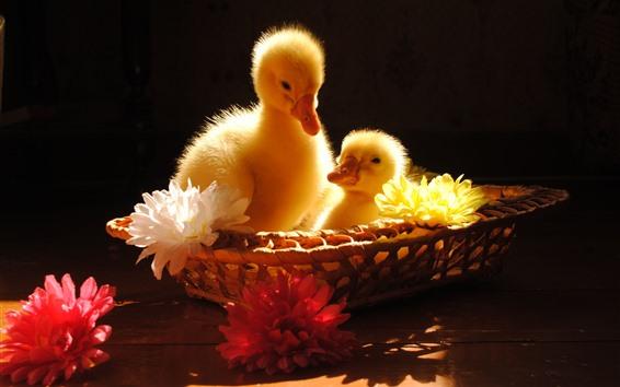 Fondos de pantalla Dos ducklings, flores, cesta, fondo negro