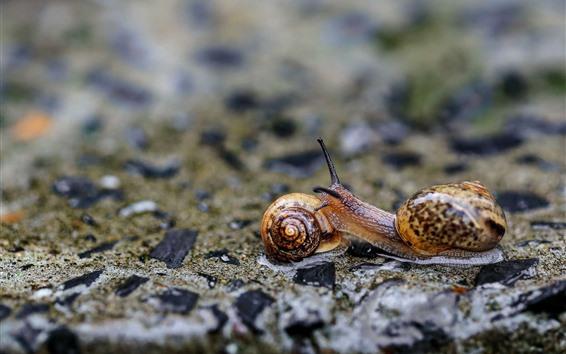 Papéis de Parede Dois caracóis, inseto, nebuloso