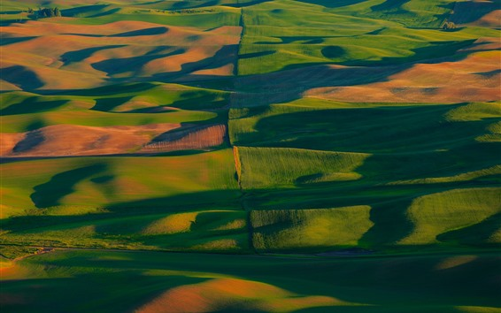 Wallpaper USA, Palouse, green wheat fields, hills, sunshine, shadow